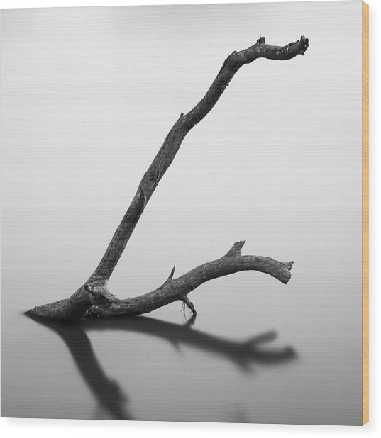 Tree Branch On The Water Wood Print