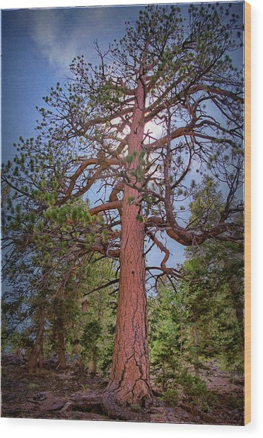 Tree Cali Wood Print