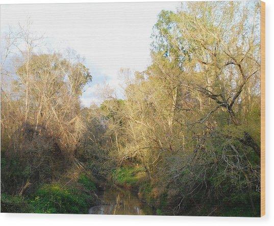 Tree Cluster Wood Print by Nancy Stutes