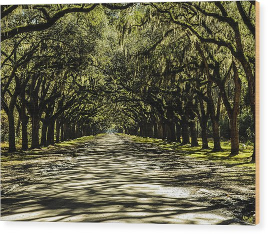 Tree Covered Approach Wood Print
