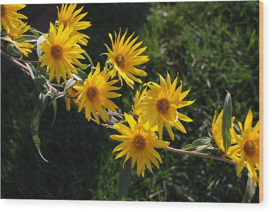 Tree Daisies Wood Print by William Thomas