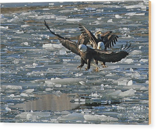 Tree Eagles On Ice Wood Print