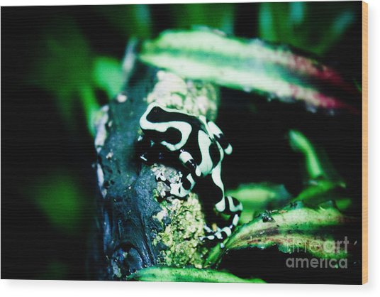 Tree Frog Wood Print by Brenton Woodruff