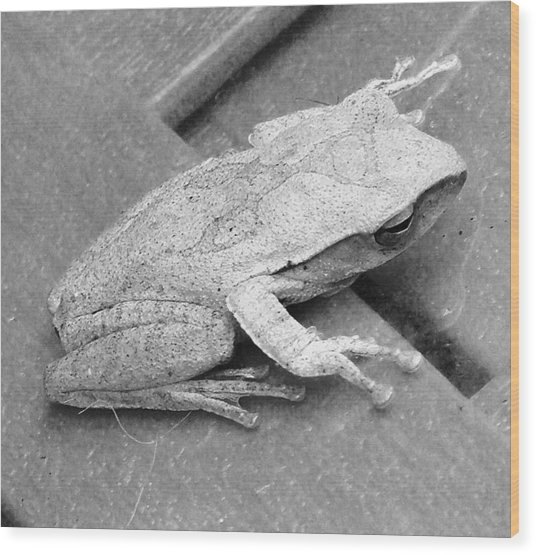 Tree Frog Up Late Wood Print by Kathy Daxon