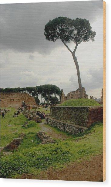 Tree In Ancient Rome Landscape Wood Print by Joseph Cossolini