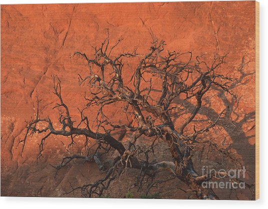 Tree In Arches Wood Print by Stan and Anne Foster