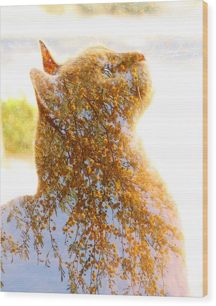 Tree In Cat Wood Print