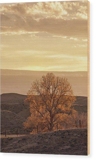 Tree In Desert At Sunset Wood Print
