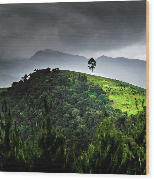 Tree In Kilimanjaro Wood Print