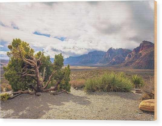 Tree In Red Rock Canyon Wood Print