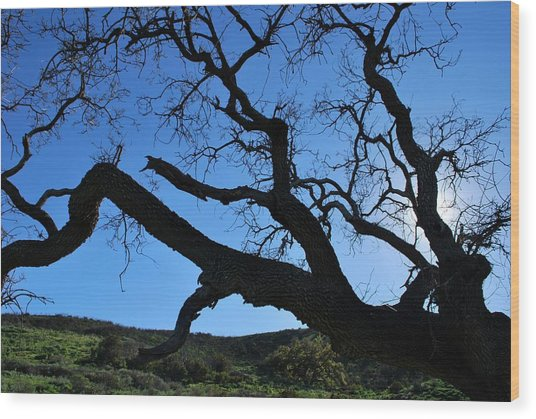 Tree In Rural Hills - Silhouette View Wood Print