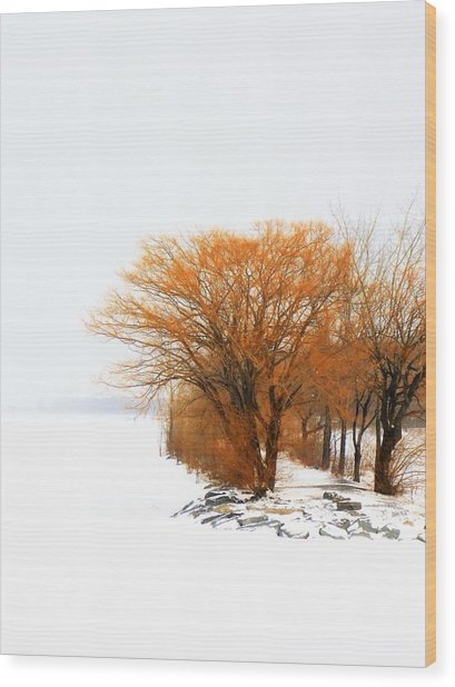 Tree In The Winter Wood Print