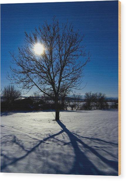 Tree Into Sun On A Winter Snowy Afternoon Wood Print