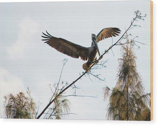 Tree Landing Wood Print