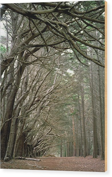 Tree Lane Wood Print
