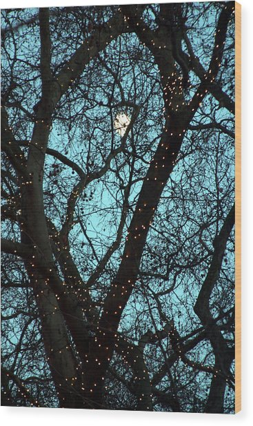 Tree Light Wood Print by Jez C Self