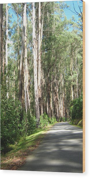 Tree Lined Mountain Road Wood Print