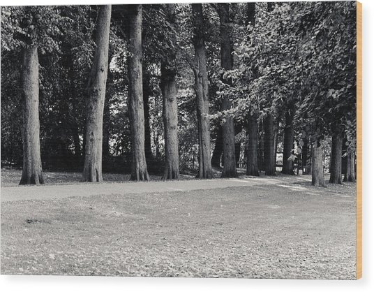 Tree Lined Path Wood Print