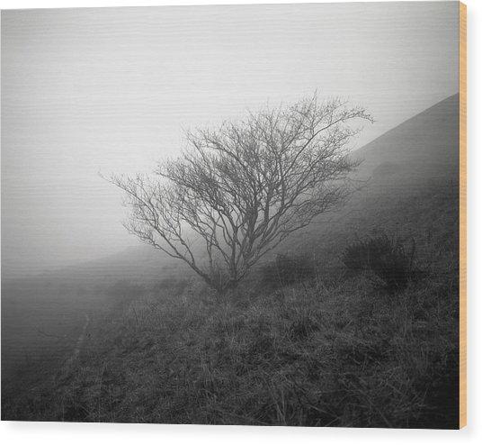 Tree Mist Wood Print by Benjamin Garvey