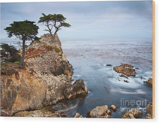 Tree Of Dreams - Lone Cypress Tree At Pebble Beach In Monterey California Wood Print