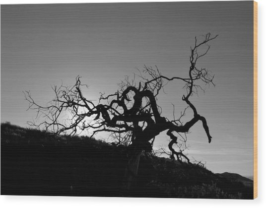 Tree Of Light Silhouette Hillside - Black And White  Wood Print
