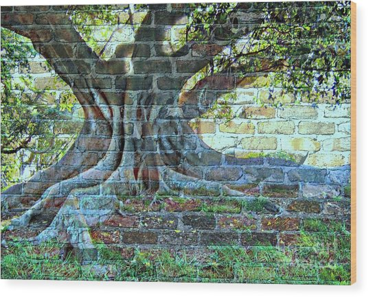 Tree On A Wall Wood Print