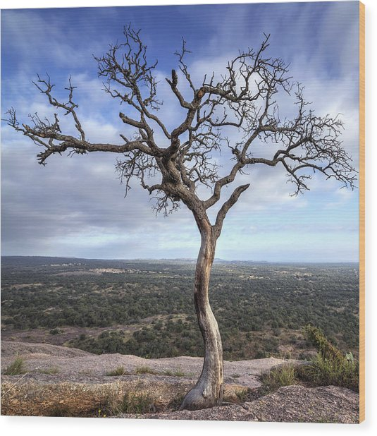 Tree On Enchanted Rock - Square Wood Print