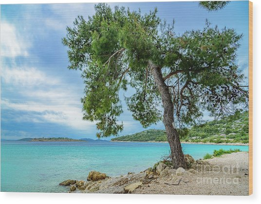 Tree On Northern Dalmatian Coast Beach, Croatia Wood Print