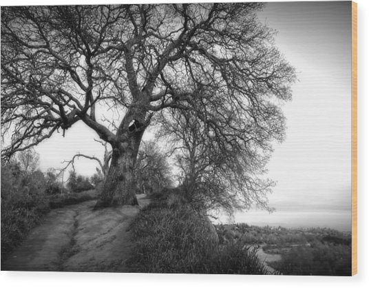 Tree On Ridge - Black And White Wood Print