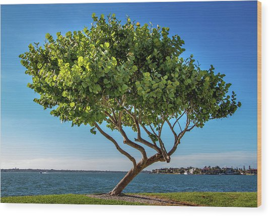 Tree On The Bay Wood Print