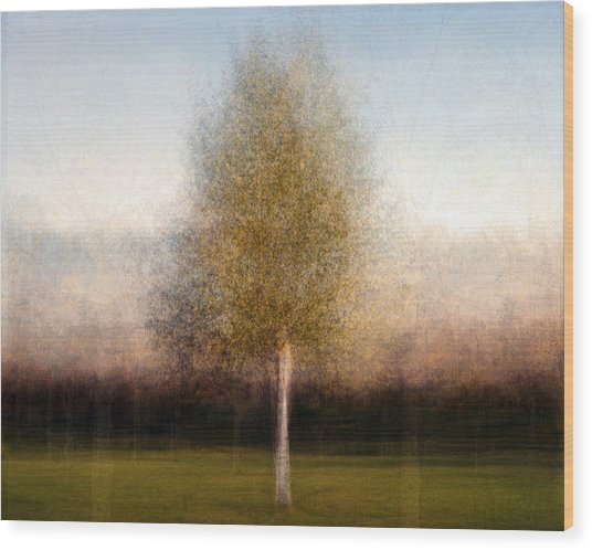 Tree One Wood Print by Denis Bouchard