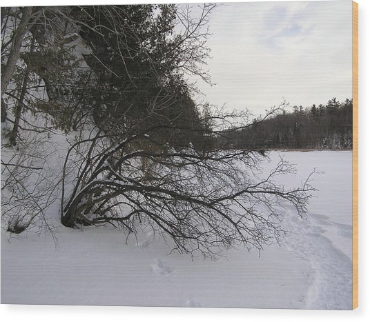 Tree Over Frozen Lake Wood Print by Richard Mitchell