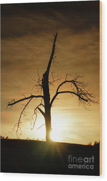 Tree Silhouette At Sundown Wood Print