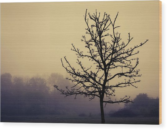 Tree Silhouette On A Foggy Morn Wood Print