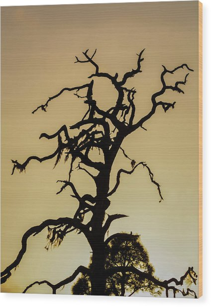 Tree Silhouette Wood Print