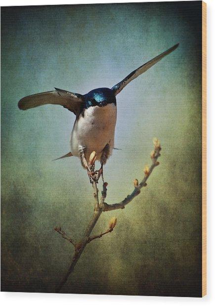 Tree Swallow 2 Wood Print
