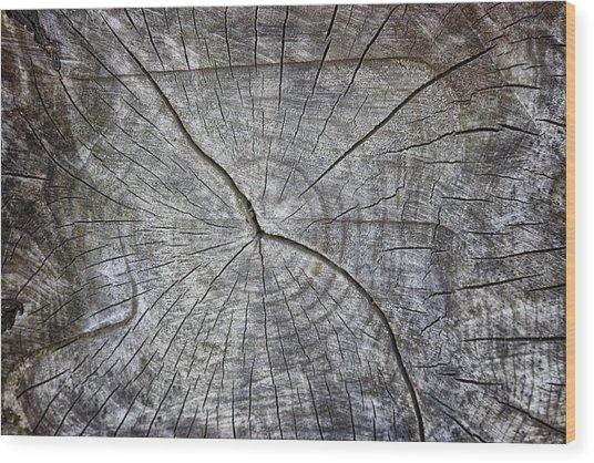 Tree Textures Wood Print