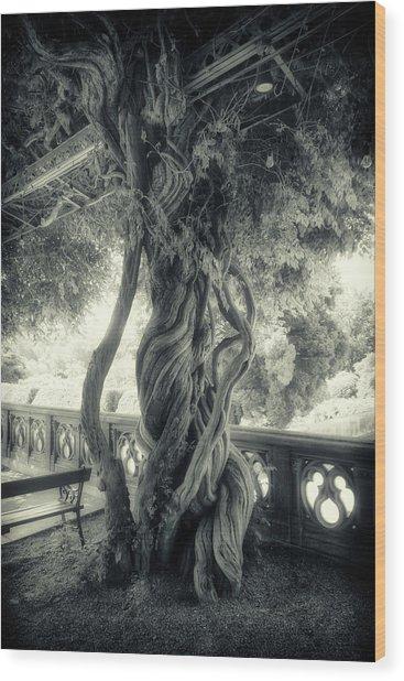 Tree Trunk Bw Series Y6693 Wood Print