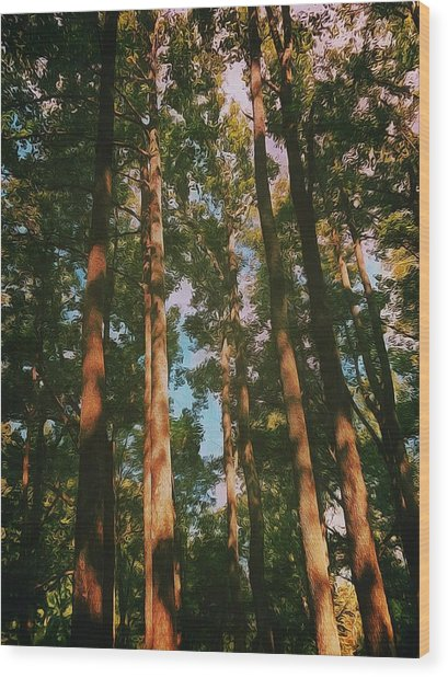 Tree Trunks Wood Print