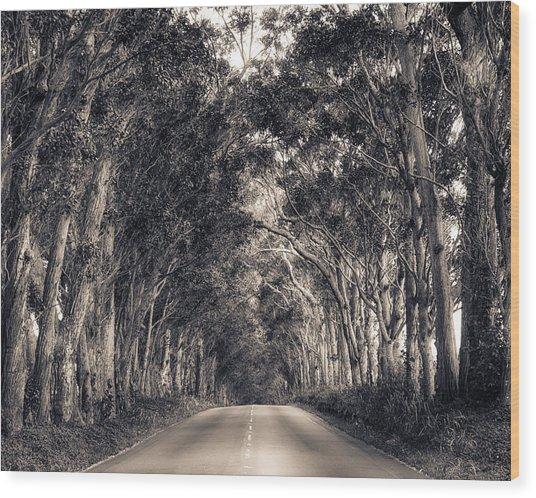 Tree Tunnel Wood Print
