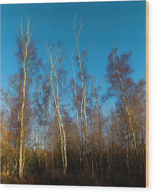 Trees And Blue Sky Wood Print
