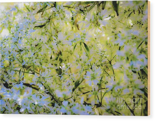 Wood Print featuring the photograph Trees And Flowers by D Davila