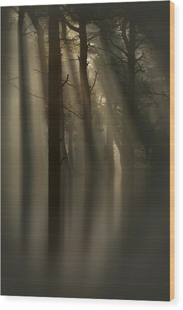 Trees And Light Wood Print
