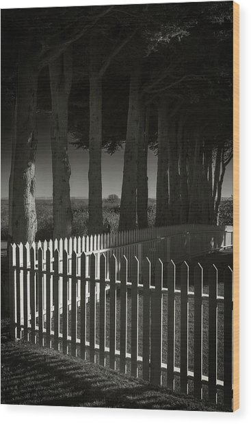 Trees And Pickets Wood Print