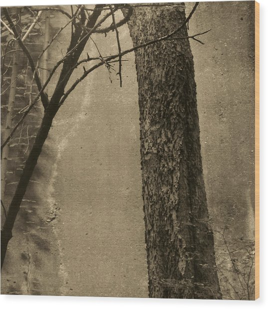Trees Growing In Silo - Square 2015 Edition - Brown Wood Print by Tony Grider