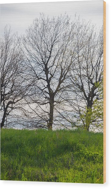 Trees In April - 2  Wood Print by Andrea Mazzocchetti