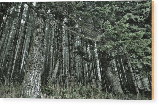 Trees In Fog Wood Print