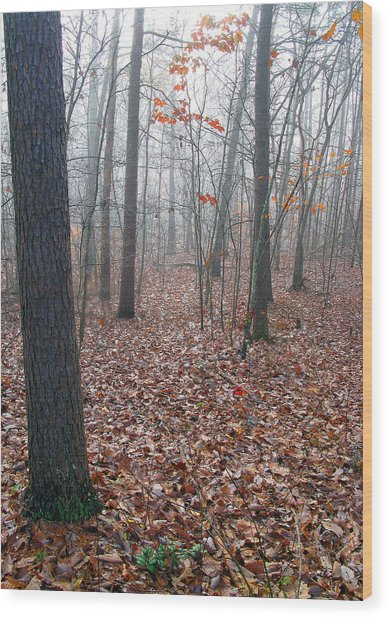 Trees In Foggy Fall Woods Wood Print by Richard Singleton