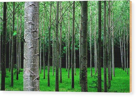 Trees In Rows Wood Print