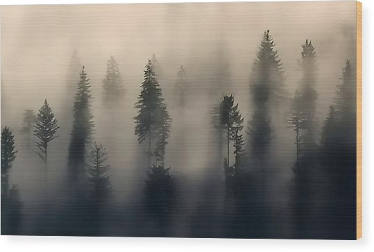 Trees In The Fog Wood Print